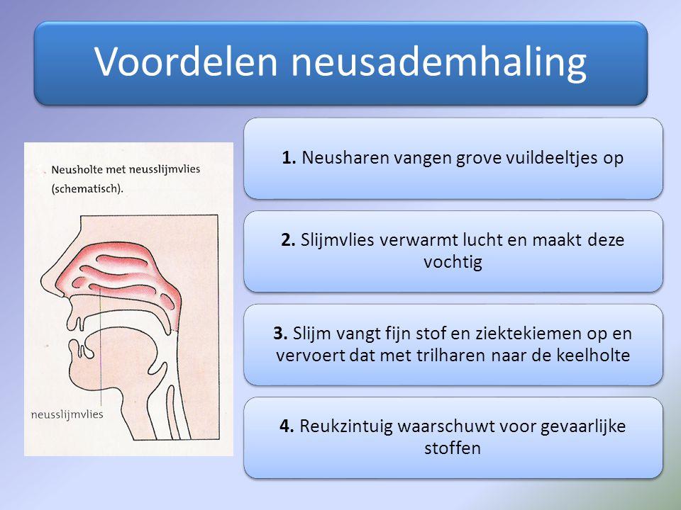 Voordelen neusademhaling