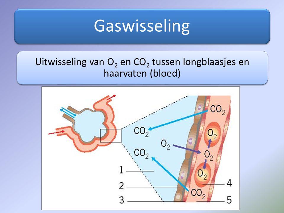 Uitwisseling van O2 en CO2 tussen longblaasjes en haarvaten (bloed)