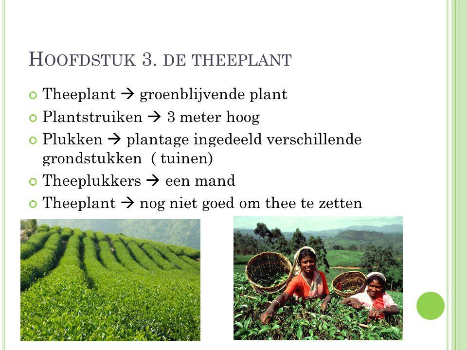 Hoofdstuk 3. de theeplant