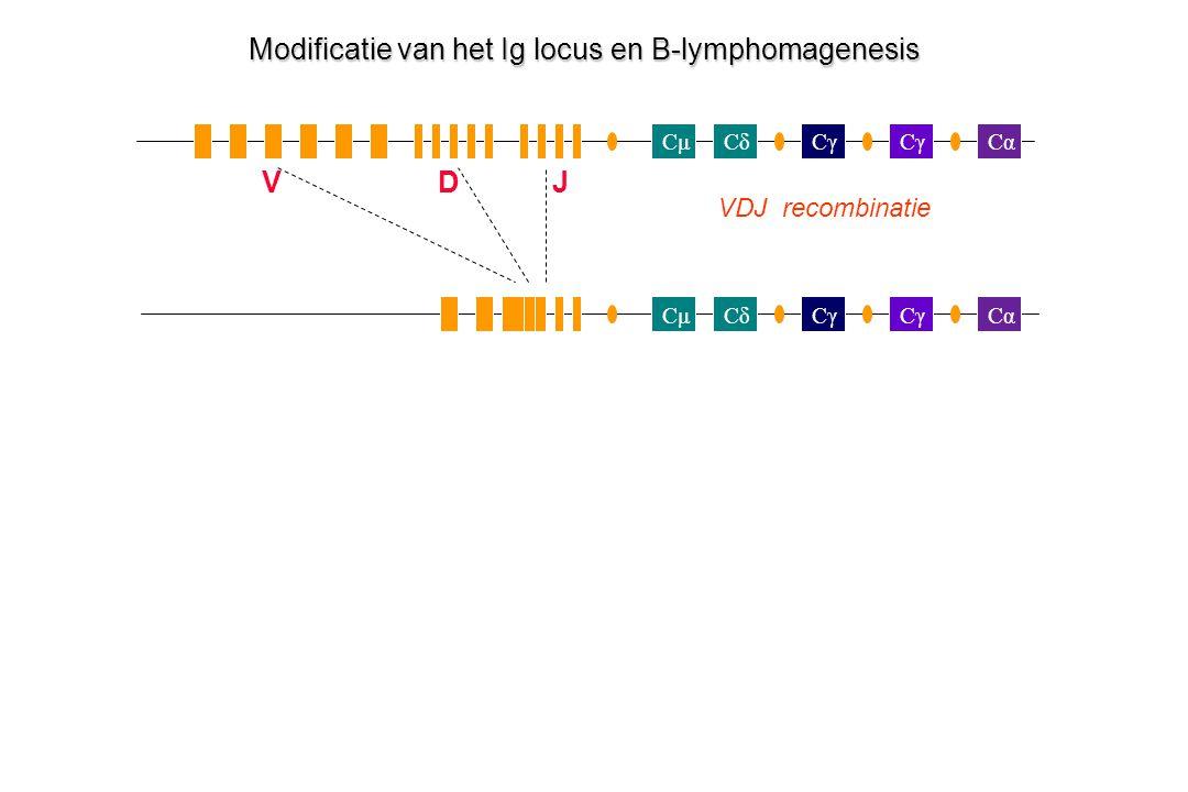 Modificatie van het Ig locus en B-lymphomagenesis