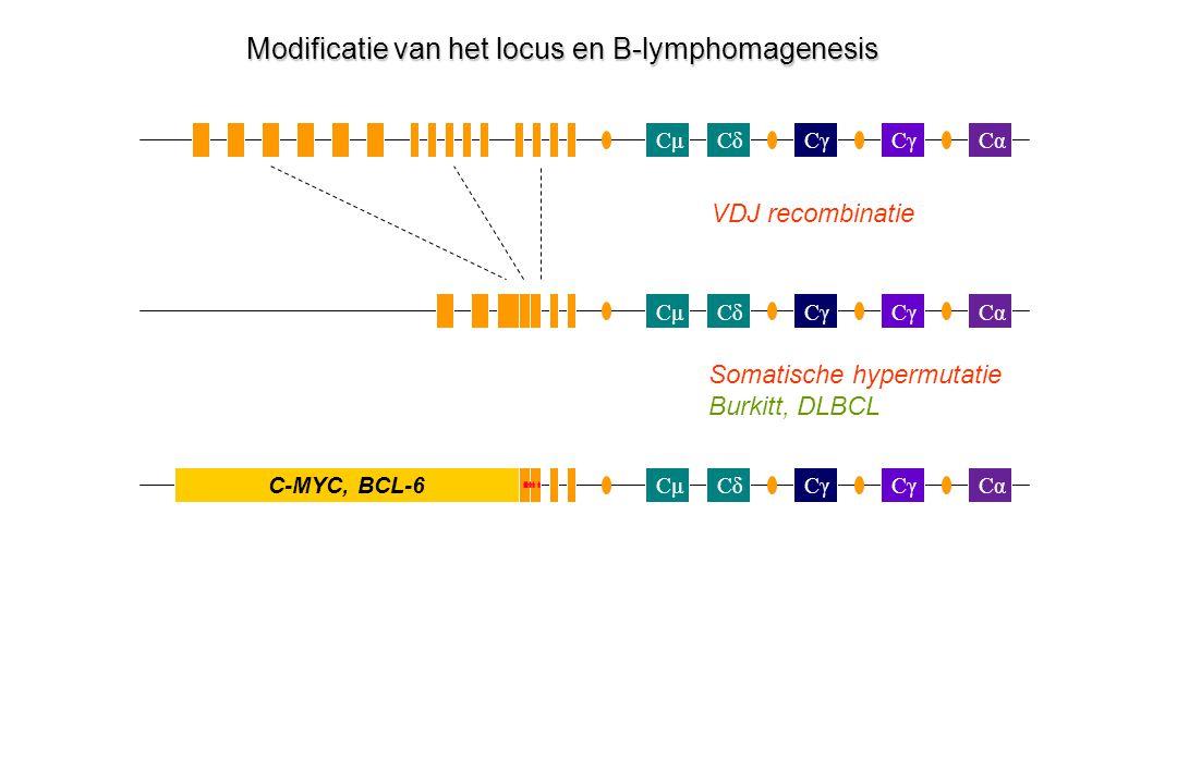 Modificatie van het locus en B-lymphomagenesis