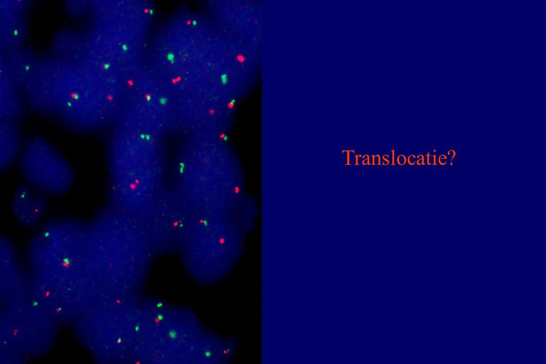 Translocatie