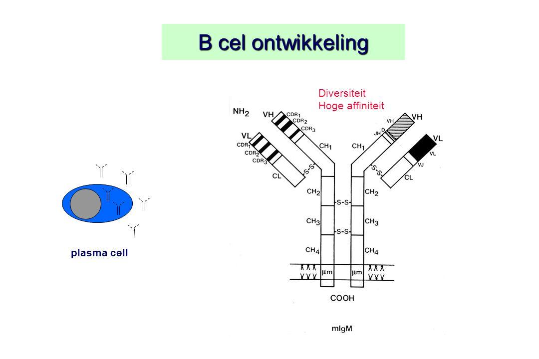 B cel ontwikkeling Diversiteit Hoge affiniteit plasma cell