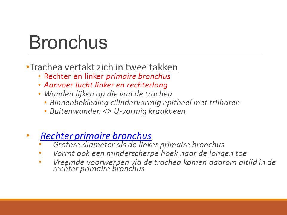 Bronchus Bronchien Trachea vertakt zich in twee takken
