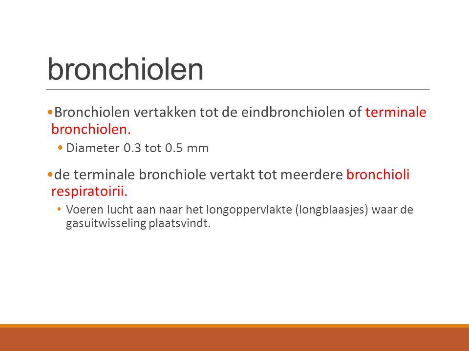 bronchiolen Bronchiolen vertakken tot de eindbronchiolen of terminale bronchiolen. Diameter 0.3 tot 0.5 mm.