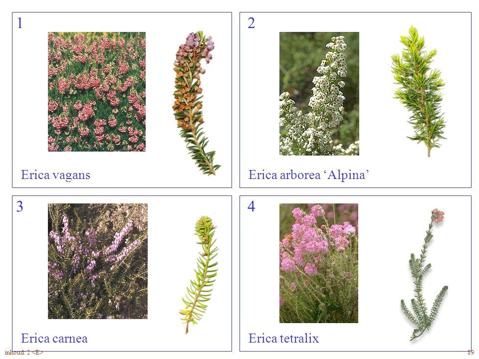 1 2 3 4 Erica vagans Erica arborea 'Alpina' Erica carnea