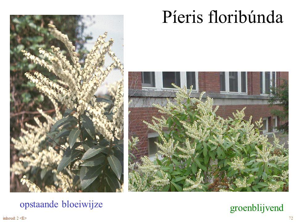 Píeris floribúnda opstaande bloeiwijze groenblijvend
