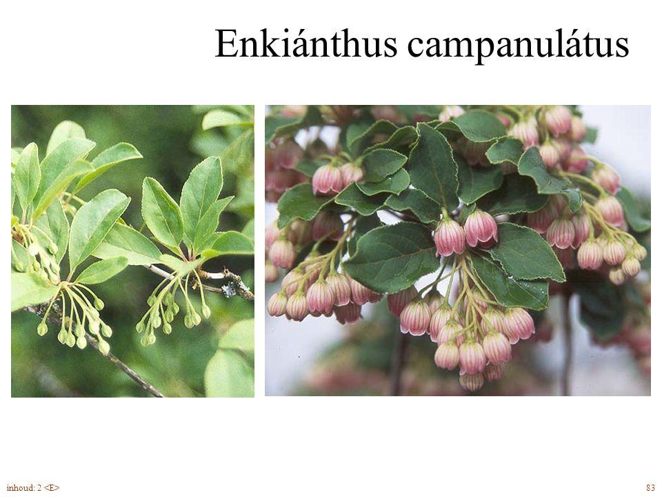 Enkiánthus campanulátus