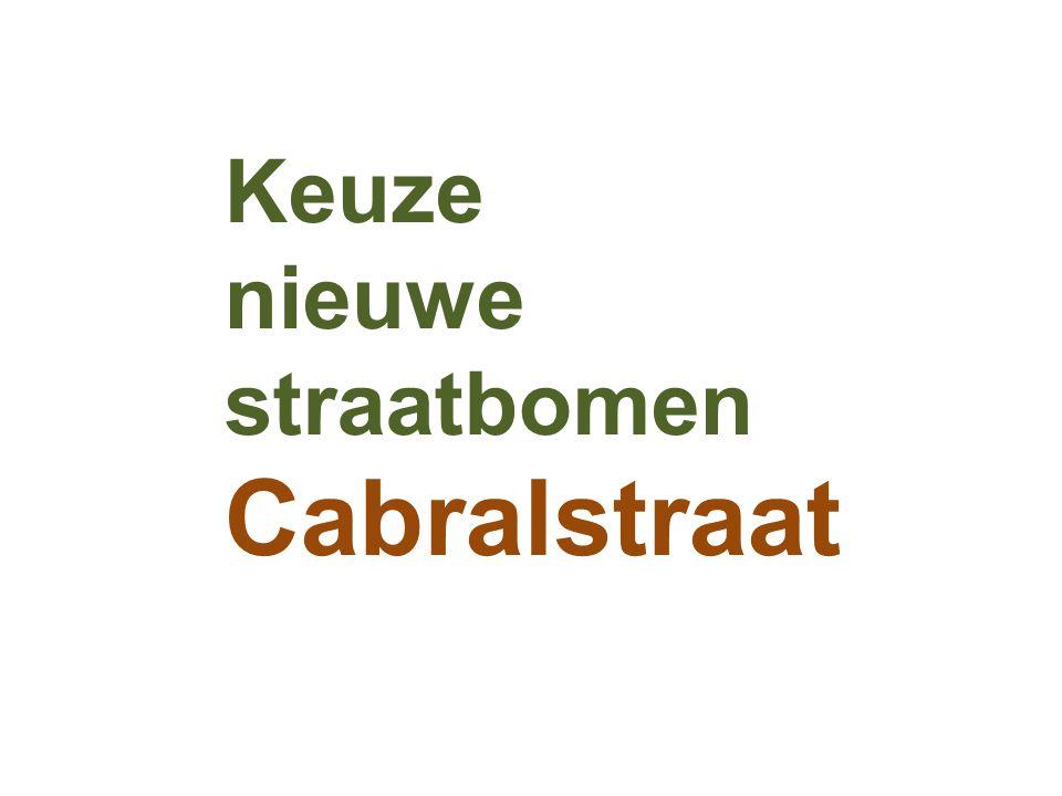 Keuze nieuwe straatbomen Cabralstraat