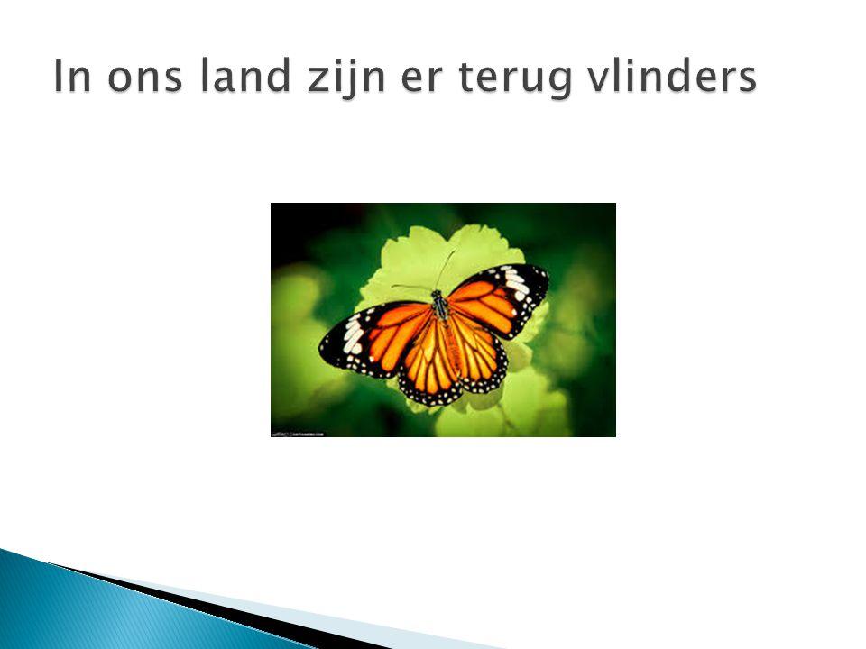 In ons land zijn er terug vlinders