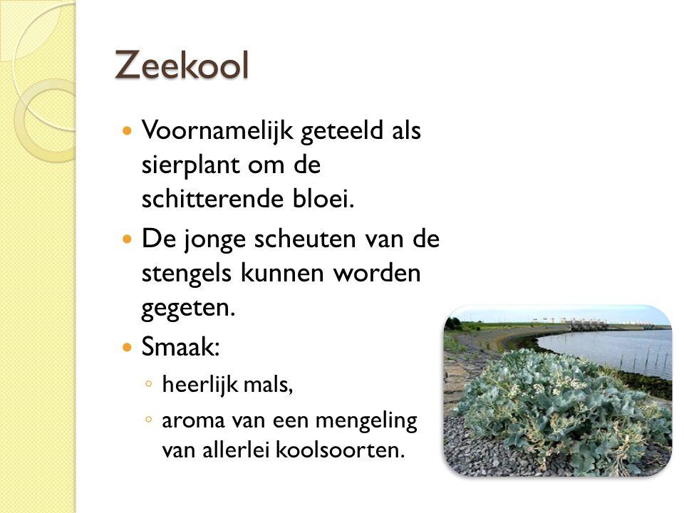 Zeekool Voornamelijk geteeld als sierplant om de schitterende bloei.