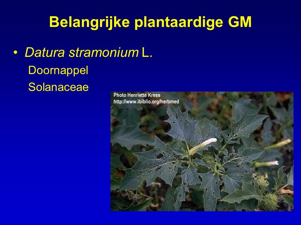 Belangrijke plantaardige GM