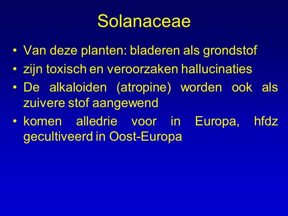 Solanaceae Van deze planten: bladeren als grondstof
