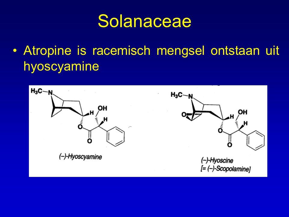 Solanaceae Atropine is racemisch mengsel ontstaan uit hyoscyamine