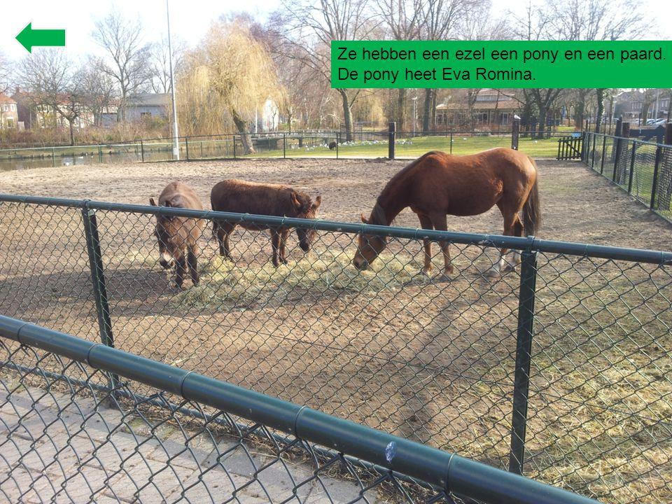 Ze hebben een ezel een pony en een paard.