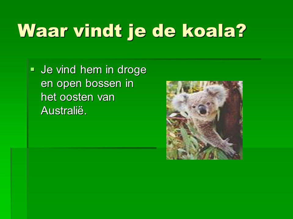 Waar vindt je de koala Je vind hem in droge en open bossen in het oosten van Australië.