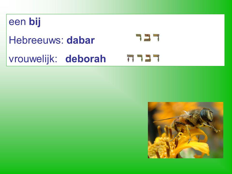een bij Hebreeuws: dabar vrouwelijk: deborah