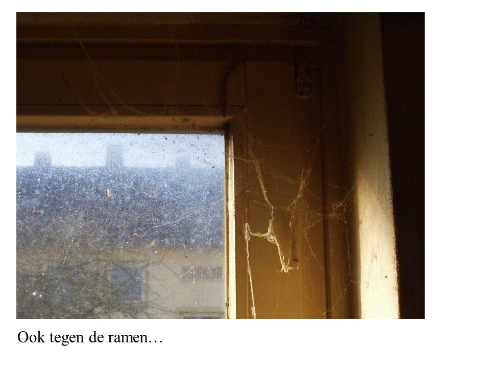 Ook tegen de ramen…