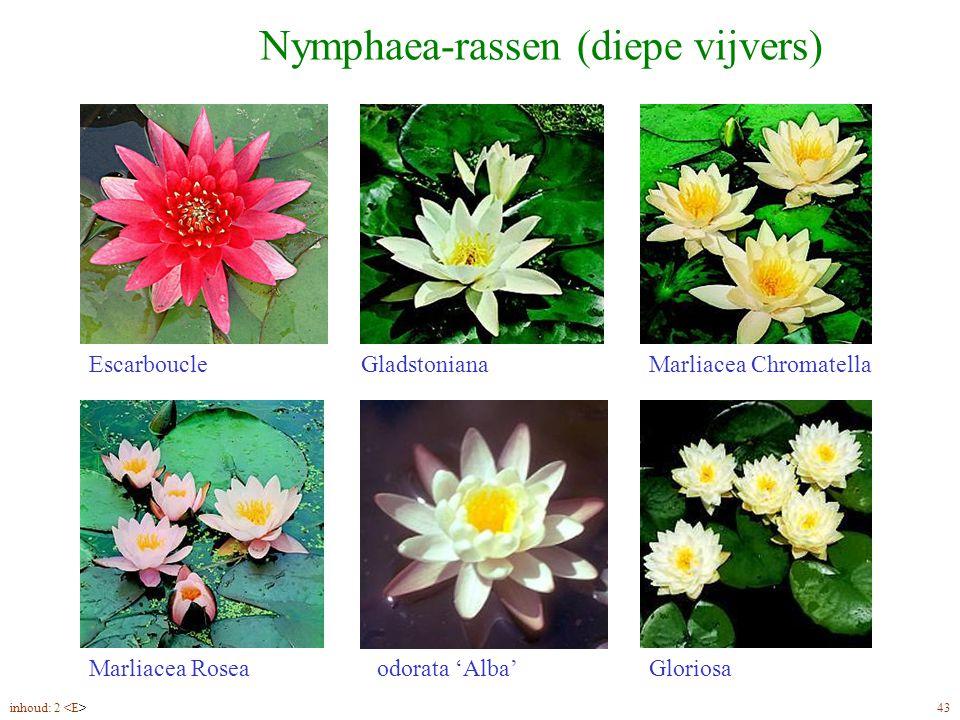 Nymphaea-rassen (diepe vijvers)
