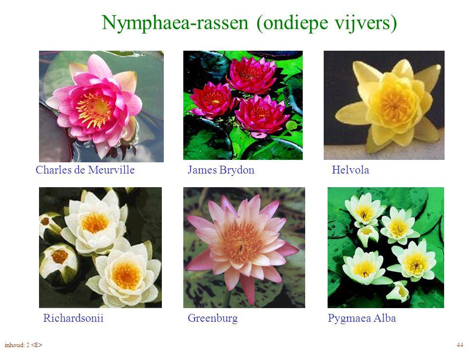 Nymphaea-rassen (ondiepe vijvers)
