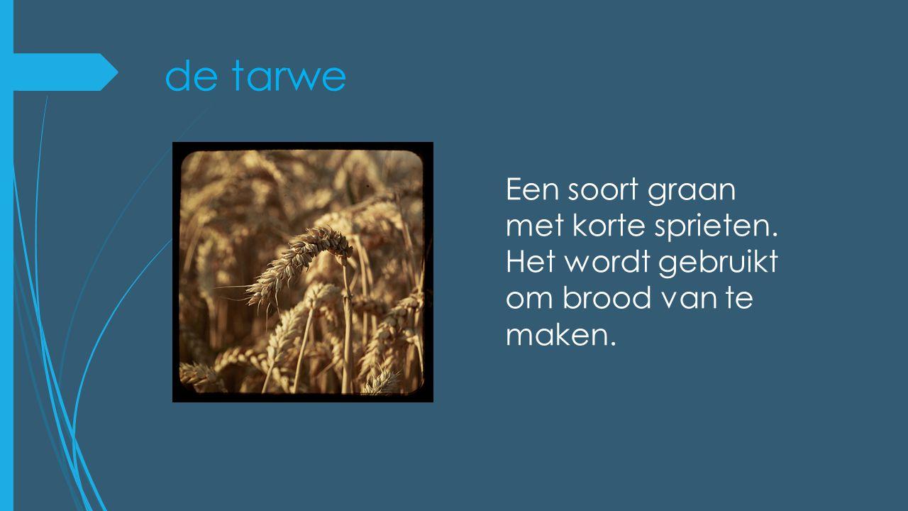 de tarwe Een soort graan met korte sprieten. Het wordt gebruikt om brood van te maken.