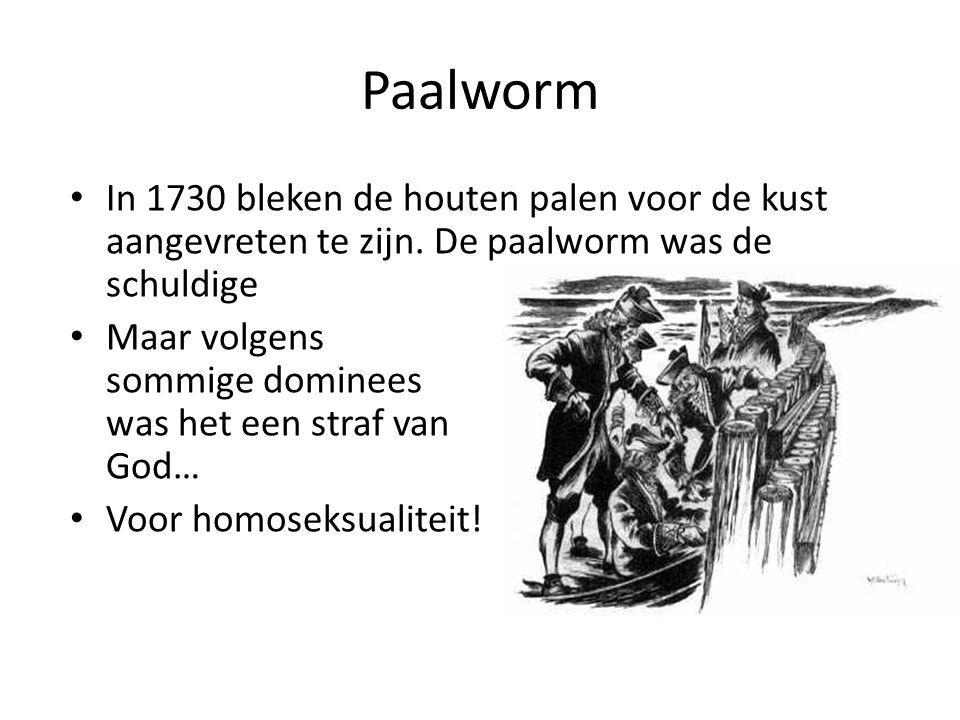 Paalworm In 1730 bleken de houten palen voor de kust aangevreten te zijn. De paalworm was de schuldige.