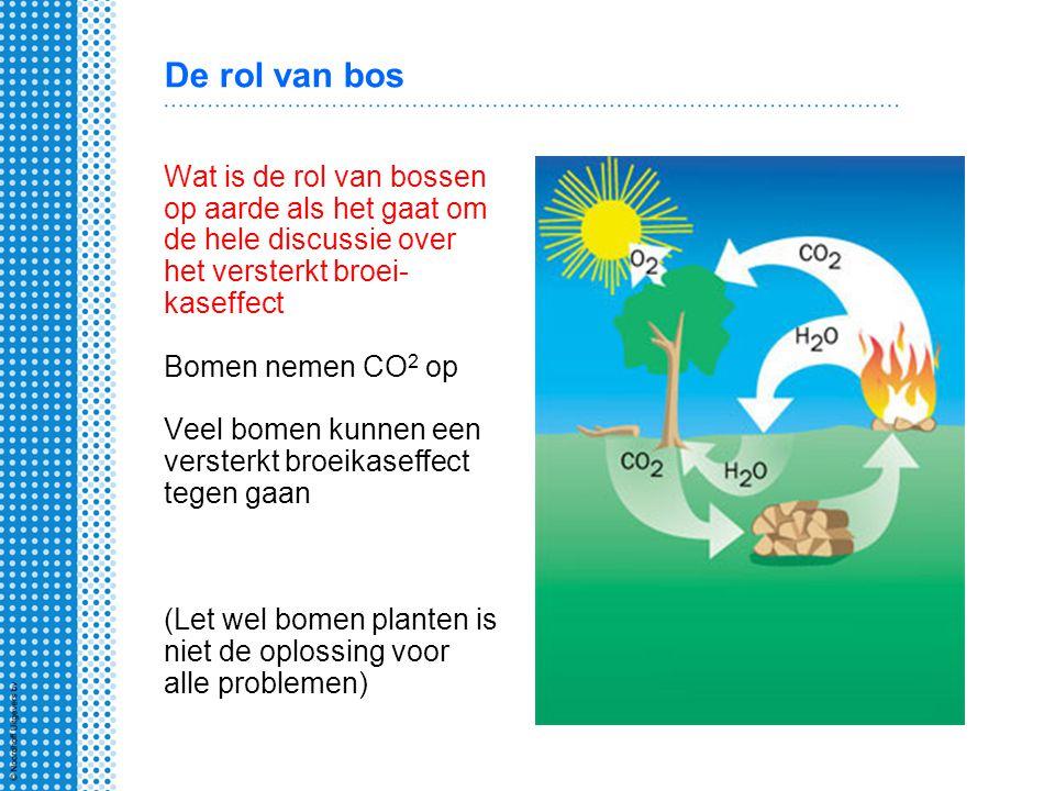 De rol van bos Wat is de rol van bossen op aarde als het gaat om