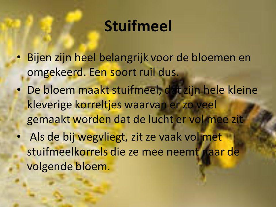 Stuifmeel Bijen zijn heel belangrijk voor de bloemen en omgekeerd. Een soort ruil dus.