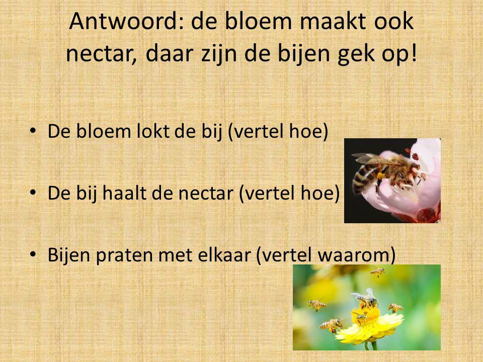Antwoord: de bloem maakt ook nectar, daar zijn de bijen gek op!