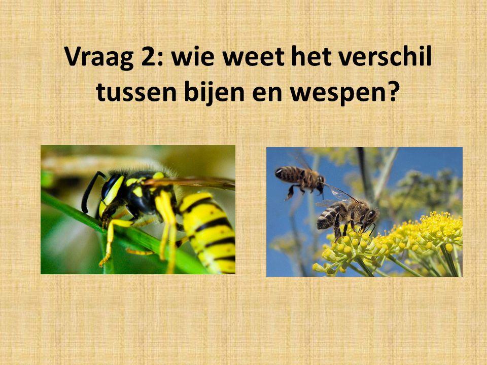 Vraag 2: wie weet het verschil tussen bijen en wespen