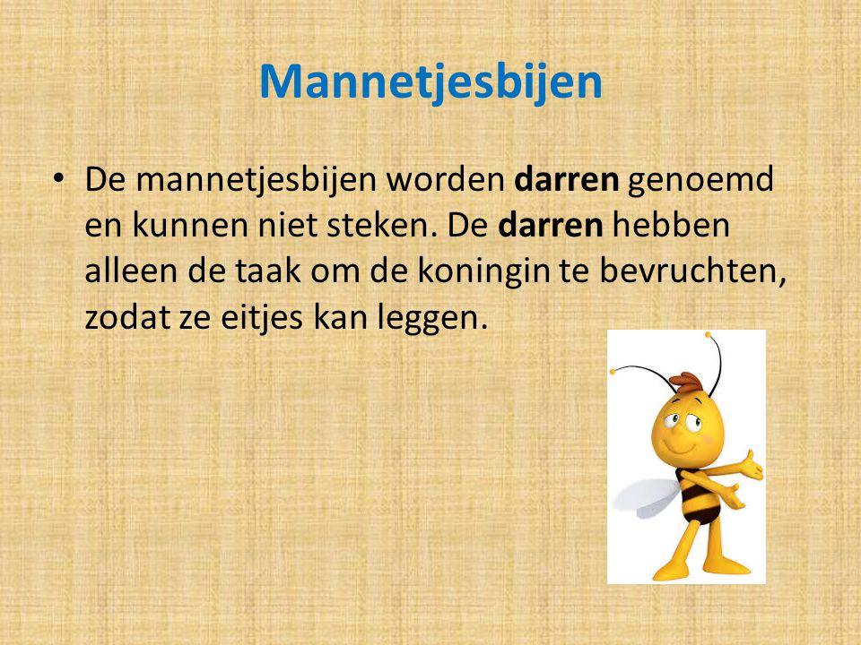 Mannetjesbijen