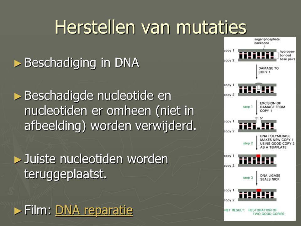 Herstellen van mutaties
