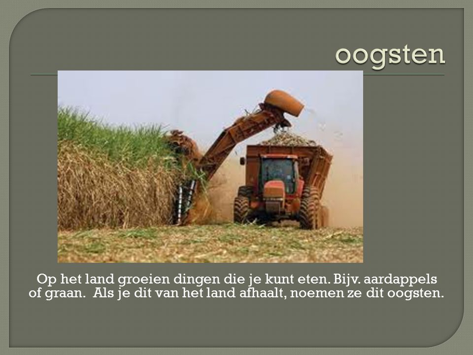oogsten Op het land groeien dingen die je kunt eten.