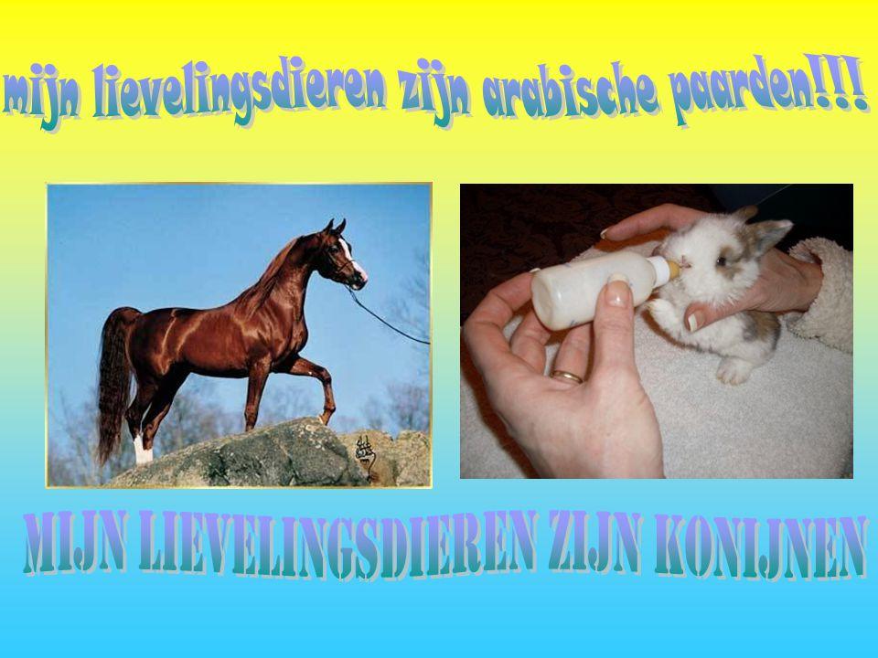 mijn lievelingsdieren zijn arabische paarden!!!