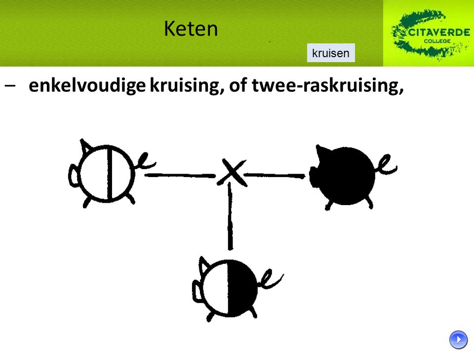 – enkelvoudige kruising, of twee-raskruising,