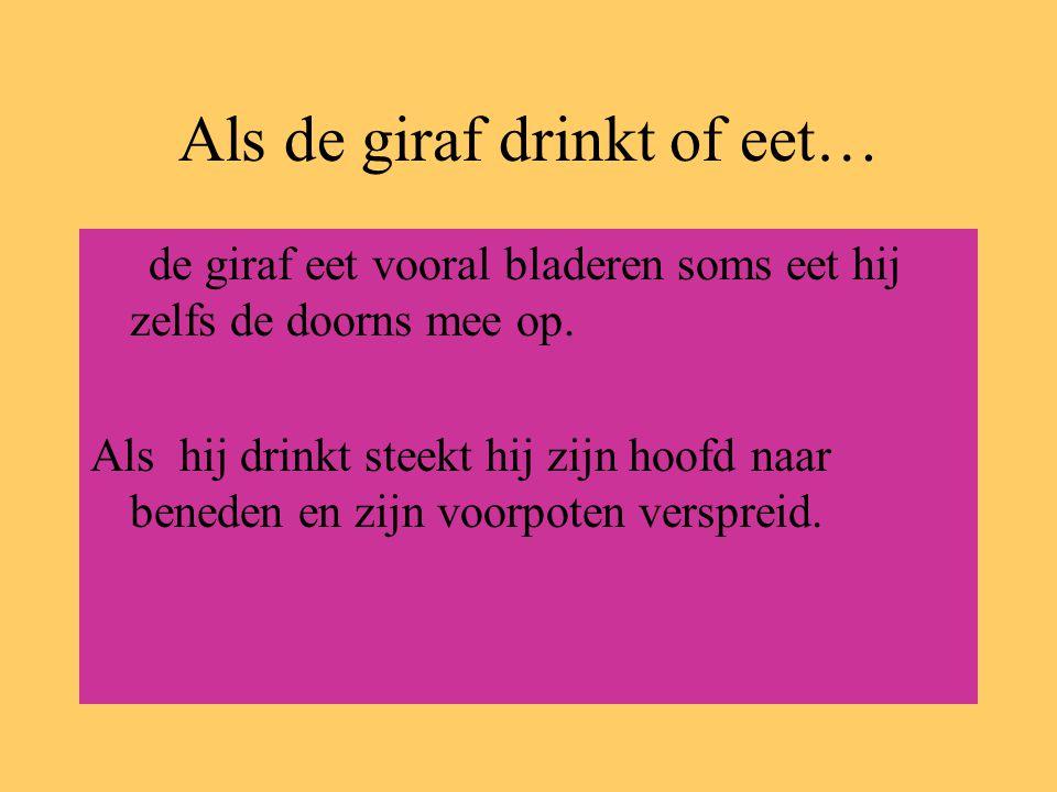 Als de giraf drinkt of eet…