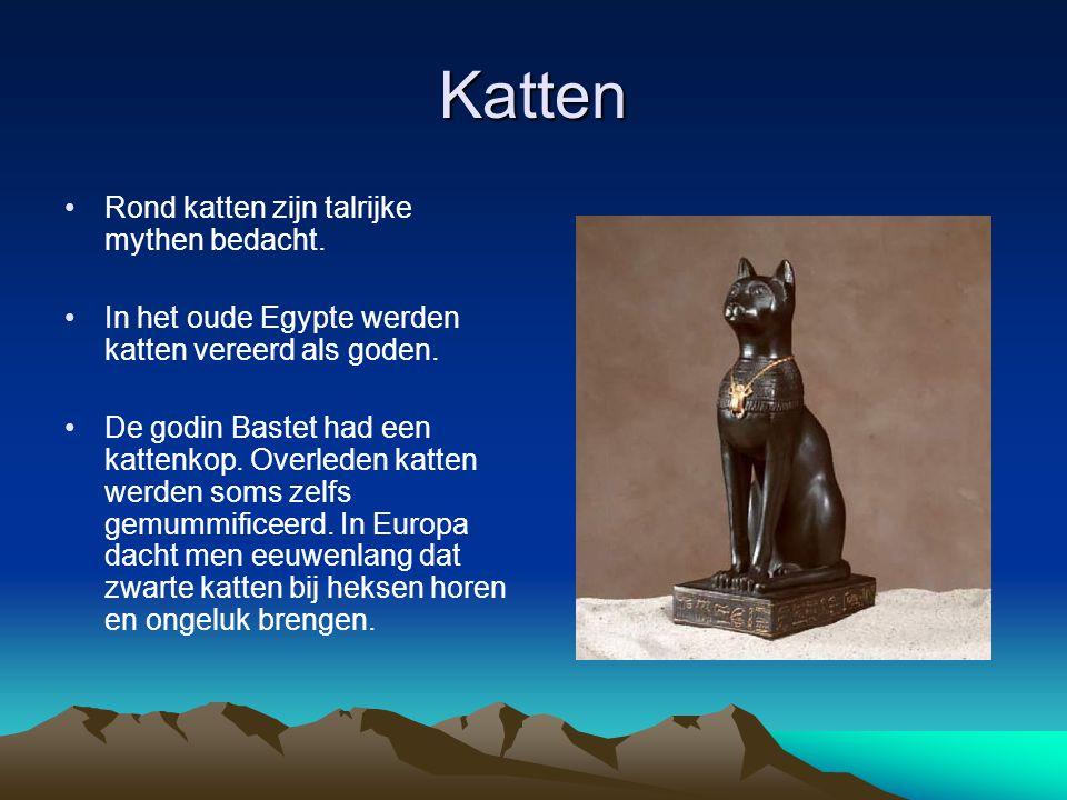 Katten Rond katten zijn talrijke mythen bedacht.