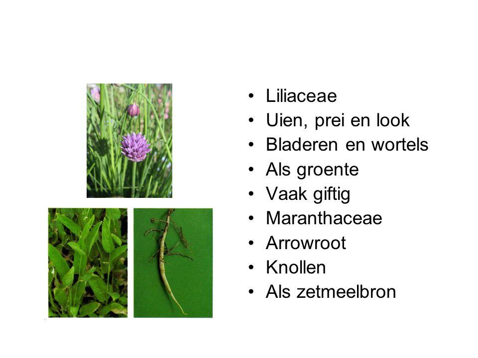 Liliaceae Uien, prei en look. Bladeren en wortels. Als groente. Vaak giftig. Maranthaceae. Arrowroot.