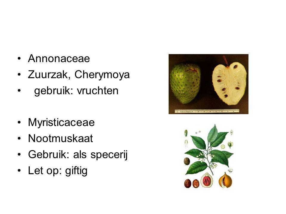 Annonaceae Zuurzak, Cherymoya. gebruik: vruchten. Myristicaceae. Nootmuskaat. Gebruik: als specerij.