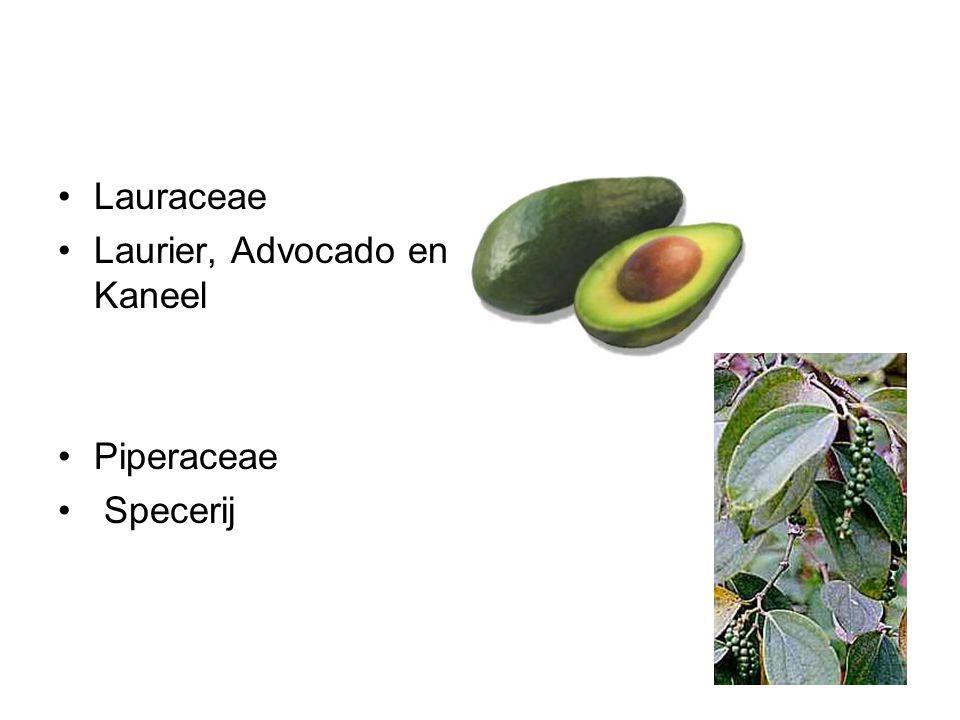 Lauraceae Laurier, Advocado en Kaneel Piperaceae Specerij