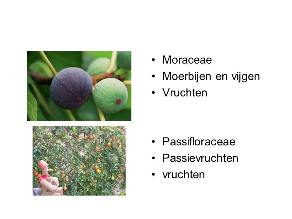 Moraceae Moerbijen en vijgen Vruchten Passifloraceae Passievruchten vruchten