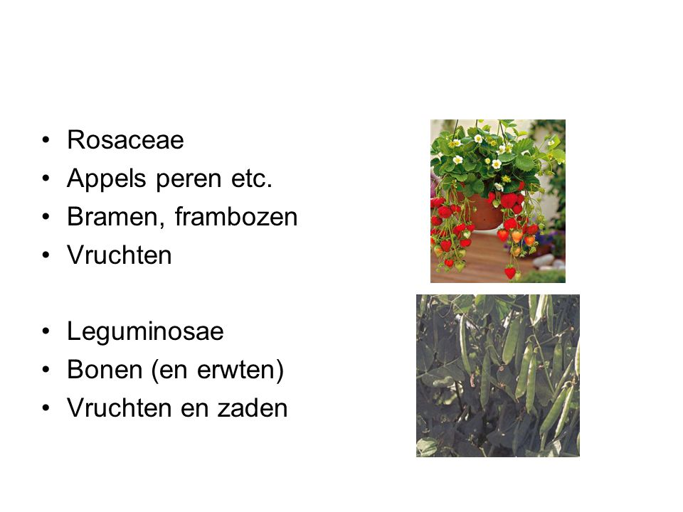 Rosaceae Appels peren etc. Bramen, frambozen. Vruchten.