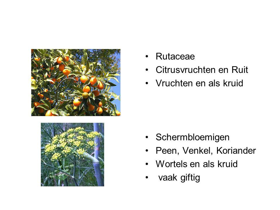 Rutaceae Citrusvruchten en Ruit. Vruchten en als kruid. Schermbloemigen. Peen, Venkel, Koriander.