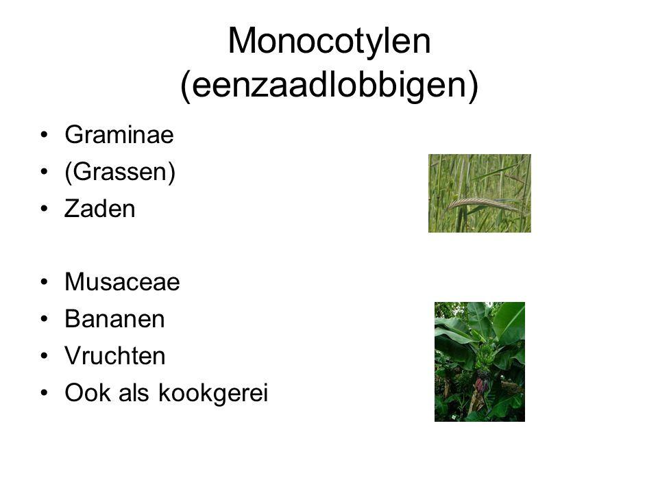 Monocotylen (eenzaadlobbigen)