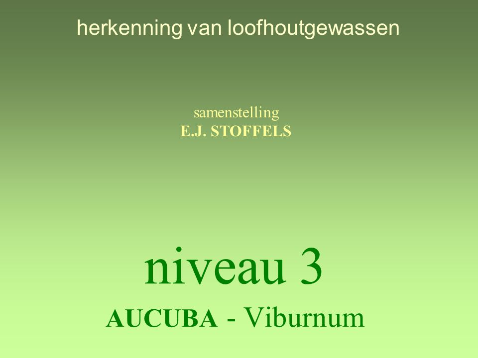 niveau 3 AUCUBA - Viburnum