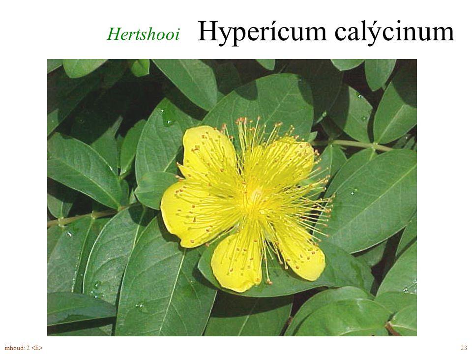Hyperícum calýcinum Hertshooi inhoud: 2 <E> 23