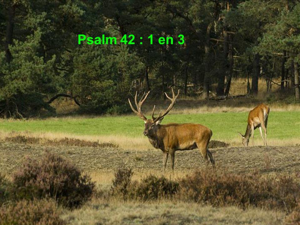 Psalm 42 : 1 en 3