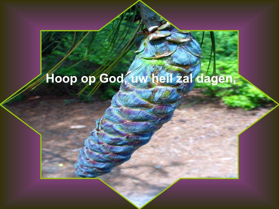 Hoop op God, uw heil zal dagen,