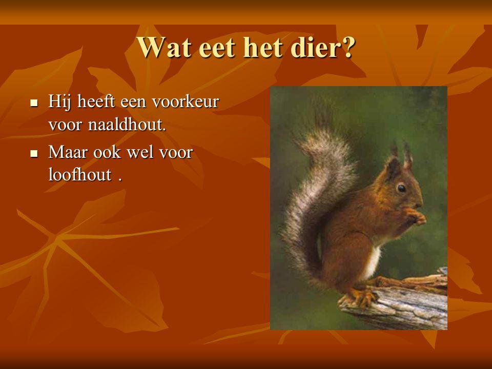 Wat eet het dier Hij heeft een voorkeur voor naaldhout.