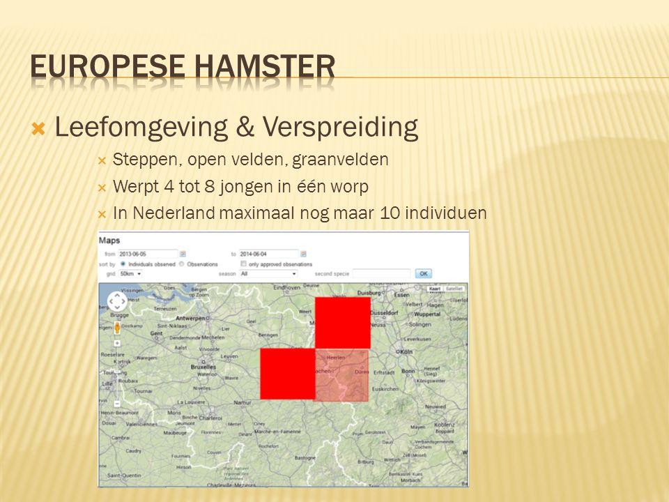 Europese hamster Leefomgeving & Verspreiding